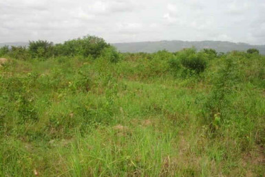 Land for Sale Accra - Ghana