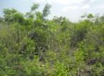 Land-for-Sale-at-Asabi-Doryumu-Shai-Hills-Accra-Ghana